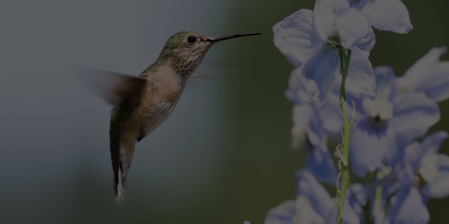 Hummingbird Websites